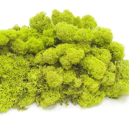 """Стабилизированный мох Ягель """"Spring green"""", 500 гр H008"""