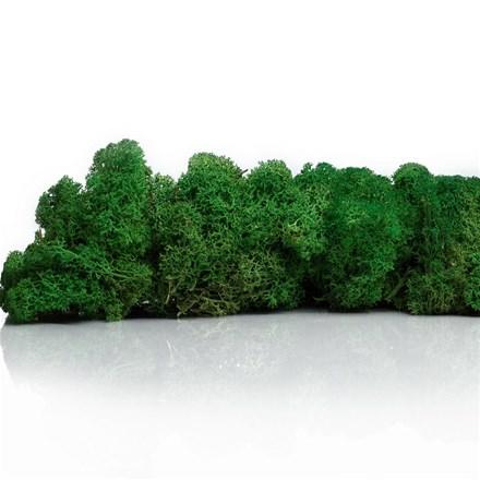 """Стабилизированный мох Ягель """"Зеленый"""", 500 гр H003"""