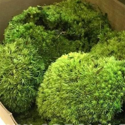 """Стабилизированный мох Кочки """"Зелёное яблоко"""", 900 гр H005"""