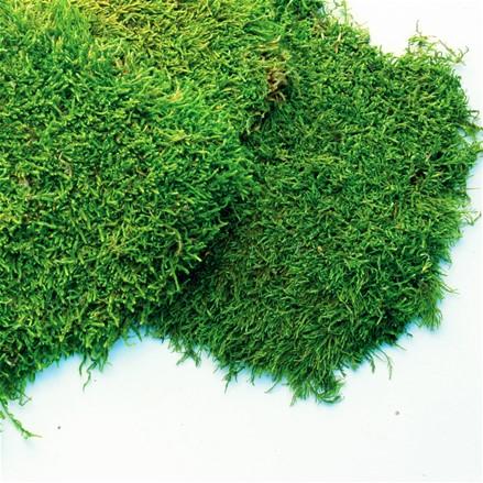 """Стабилизированный мох Пласты """"Зелёный"""", 500 гр H012"""