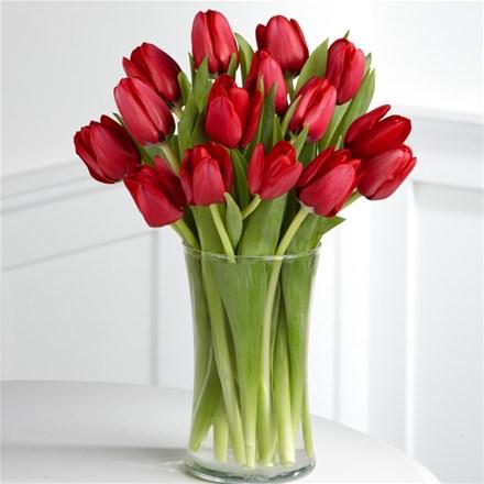 Тюльпан красный (шт)