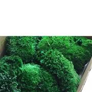 """Стабилизированный мох Кочки """"Тёмно-зелёный"""", 900 гр H003"""