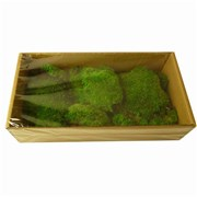 Стабилизированный мох Кочки H005