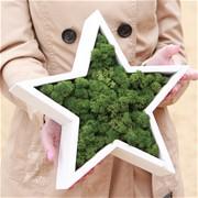 Декоративная звезда из стабилизированного мха H018