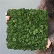 Готовая панель из Мха Ягель,  для создания зеленой стены, 30*30 см H004