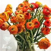 Ранункулюс оранжевый (шт)