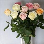 Роза белая розовая кремовая (шт)
