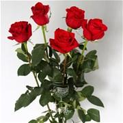 Роза красная (шт)
