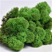 """Стабилизированный мох Ягель """"Medium green"""", 500 гр H007"""