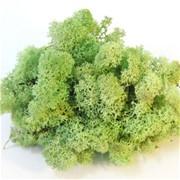 """Стабилизированный мох Ягель """"Mint green"""", 500 гр H009"""