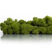 """Стабилизированный мох Ягель """"Зеленое яблоко"""", 500 гр H004"""